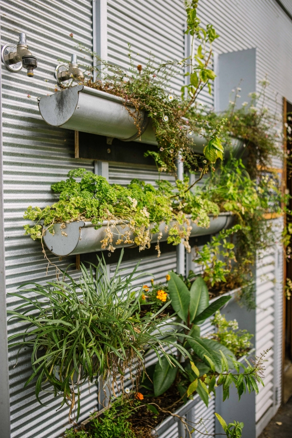 Green walls can be used on vertical surfaces and rooftops to break up stark uncomfortable material like concrete or metal