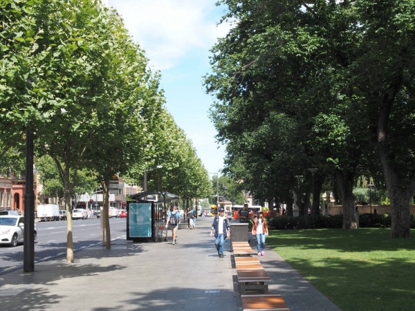 A continuous path of tree canopies can help cool a street