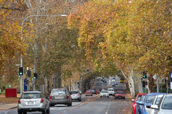 Park Lands Avenues such as Frome Street provide a connection between the Park Lands and the city